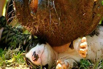 Rocket Dog Whiskers  Meerkats Fanon Wiki